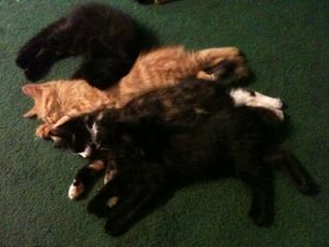 pic of four kittens