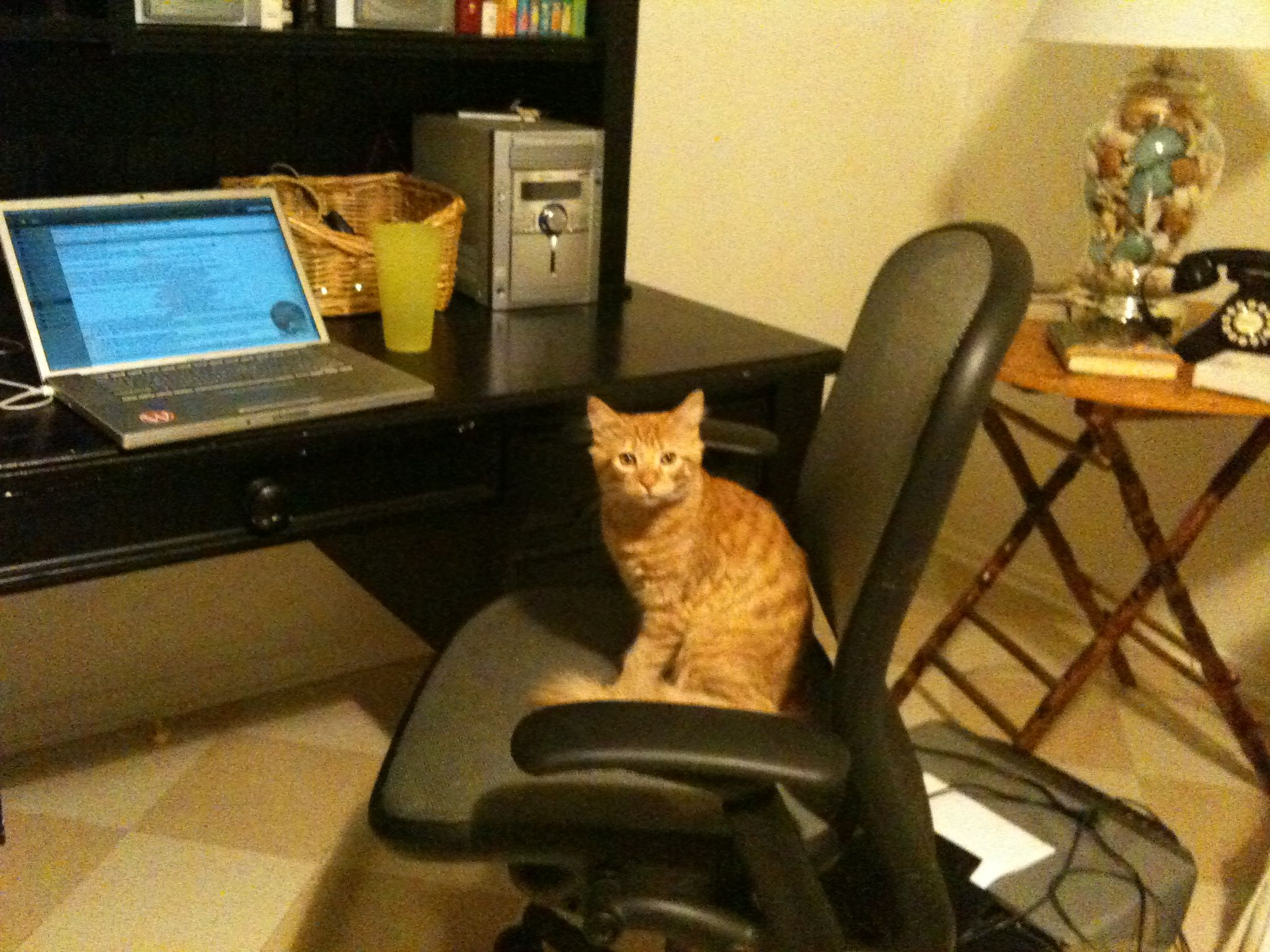 [Image: kitteh-desk.jpg]