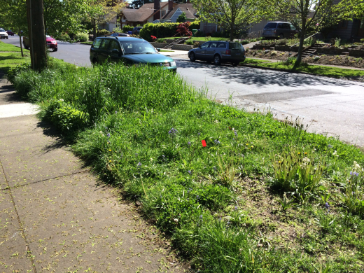 The sidewalk strip. Note that the newly planted grass at the end is much taller than the rest.